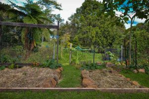 Community garden at MNC